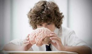 imagen niño y cerebro